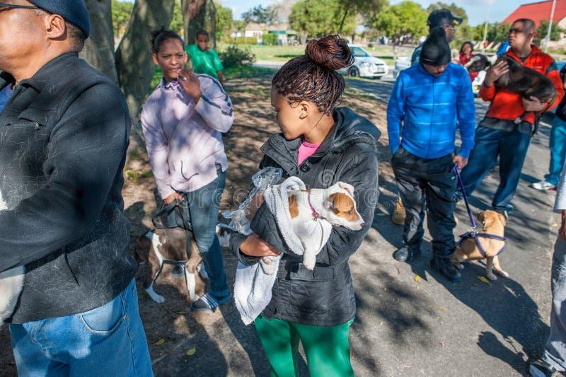 Δραστηριότητες για την καλή μεταχείριση των ζώων στο Cape Town Νότια Αφρική στοκ φωτογραφία με δικαίωμα ελεύθερης χρήσης