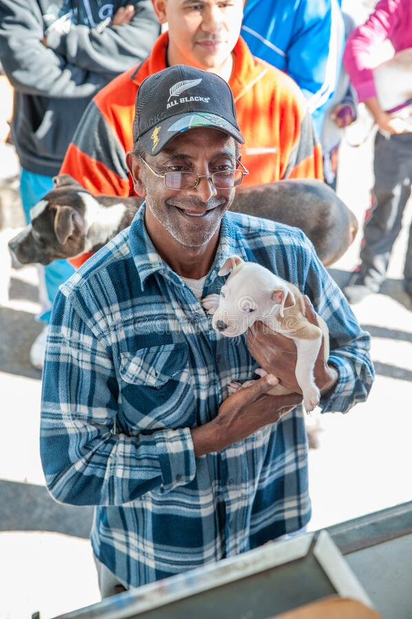 Δραστηριότητες για την καλή μεταχείριση των ζώων στο Cape Town Νότια Αφρική στοκ φωτογραφίες με δικαίωμα ελεύθερης χρήσης