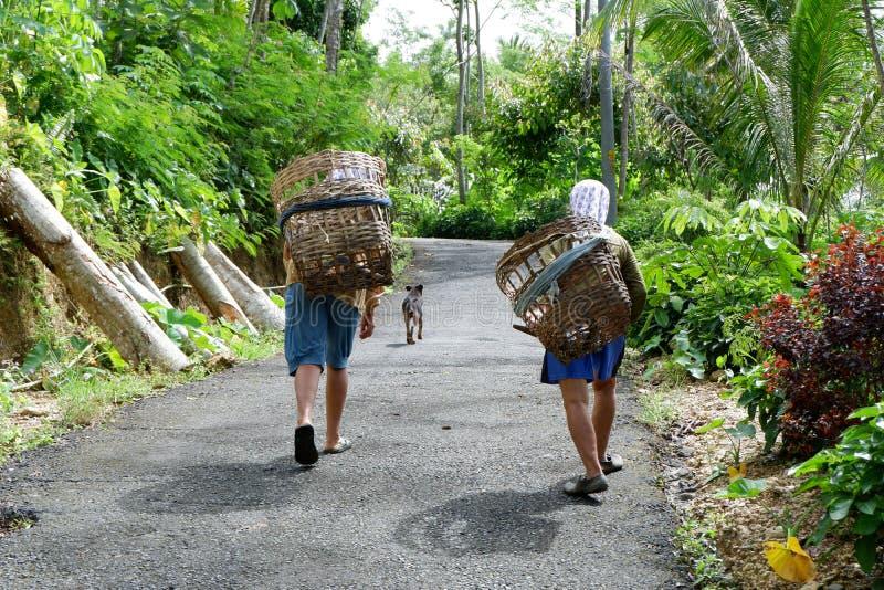 δραστηριότητες των ανθρώπων που ψάχνουν τη χλόη στο δάσος για να ταΐσει το ζωικό κεφάλαιο με τα καλάθια στοκ εικόνες με δικαίωμα ελεύθερης χρήσης