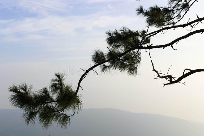 Δροσερός ουρανός πριν από την ανατολή σε Phurua στοκ φωτογραφία με δικαίωμα ελεύθερης χρήσης