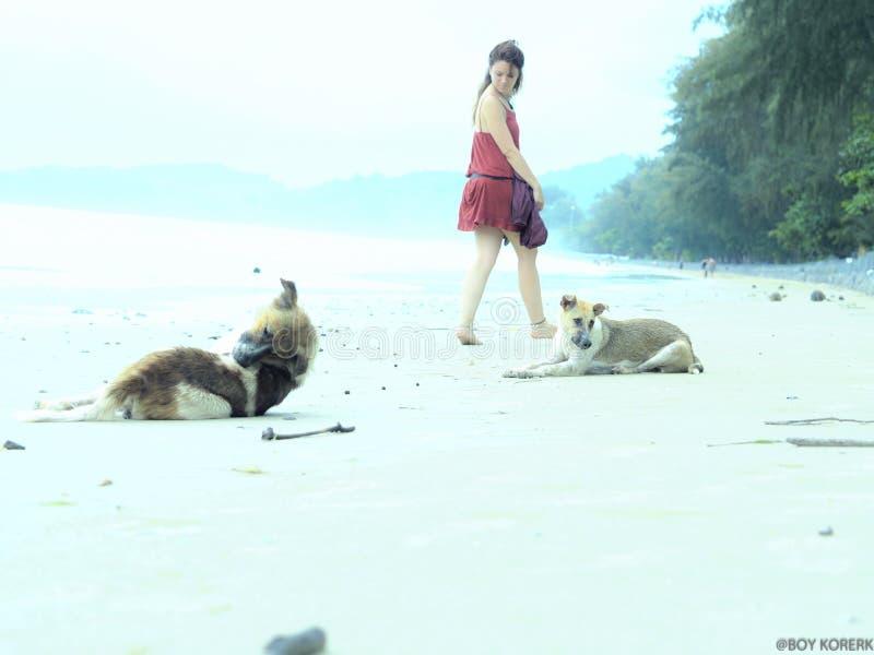Δροσερό κορίτσι σκυλιών παραλιών @ στοκ εικόνα