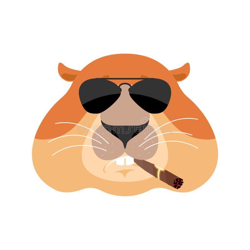 Δροσερό σοβαρό είδωλο Groundhog των συγκινήσεων Woodchuck που καπνίζει cig διανυσματική απεικόνιση