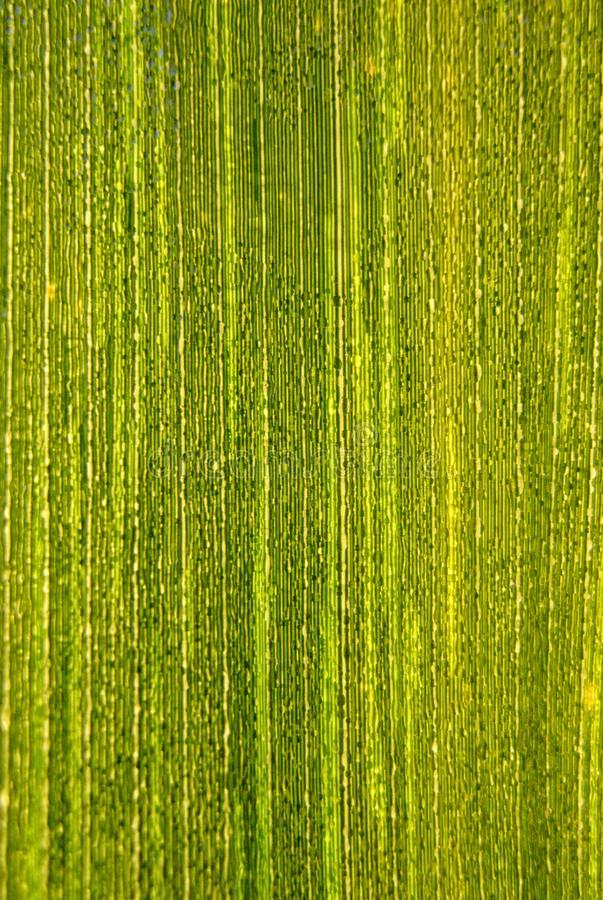 Δροσοσταλίδες πέρα από ένα πράσινο φύλλο Ι στοκ εικόνες