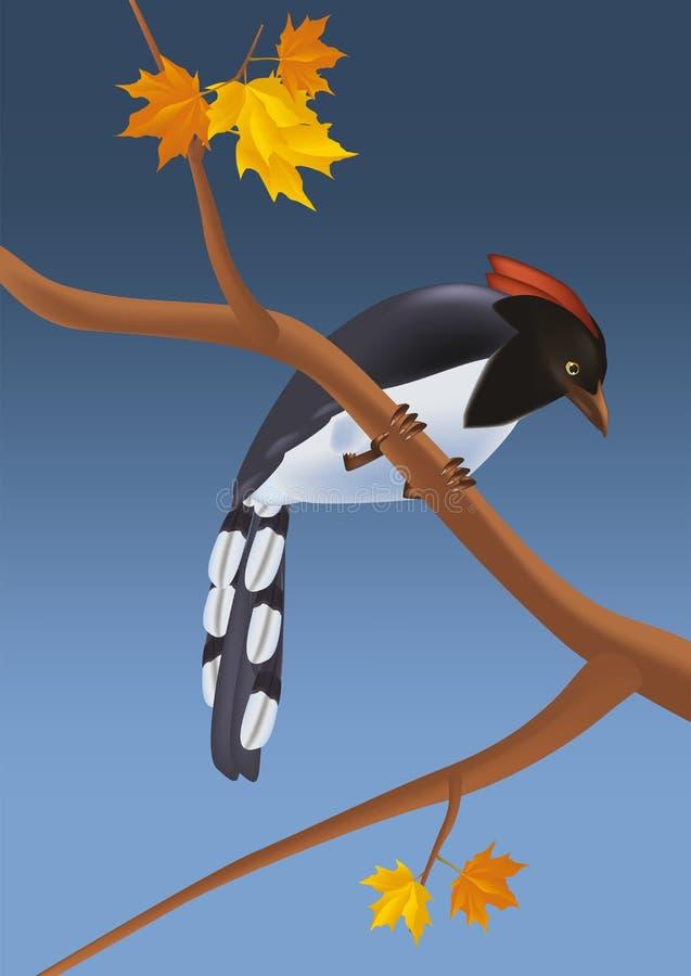 δρυοκολάπτης πουλιών διανυσματική απεικόνιση