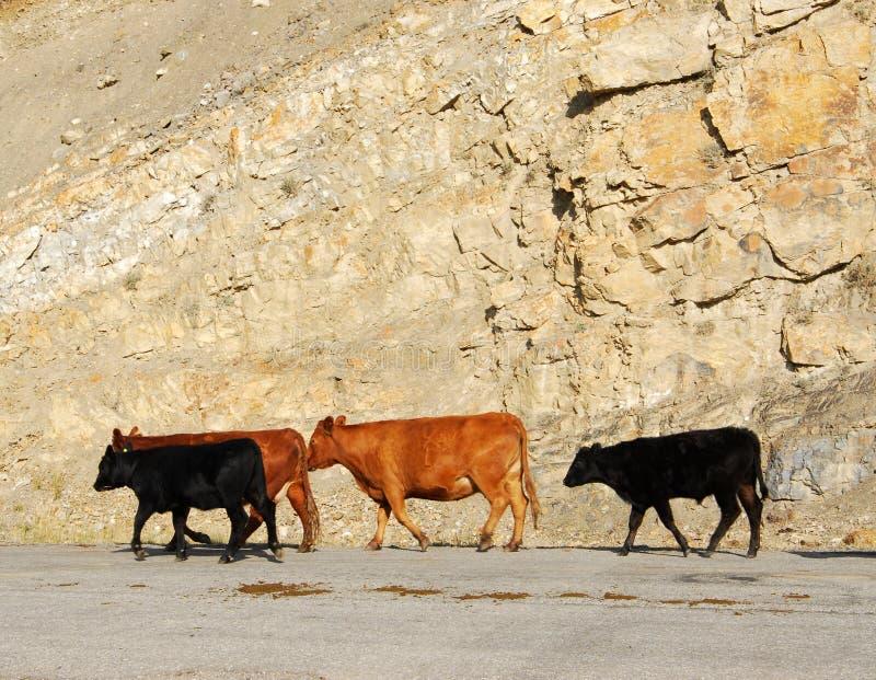 δρόμος αγελάδων στοκ εικόνα
