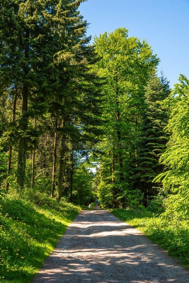 Δρόμος αμμοχάλικου μέσω του πράσινου δάσους, Velbert στοκ φωτογραφία με δικαίωμα ελεύθερης χρήσης