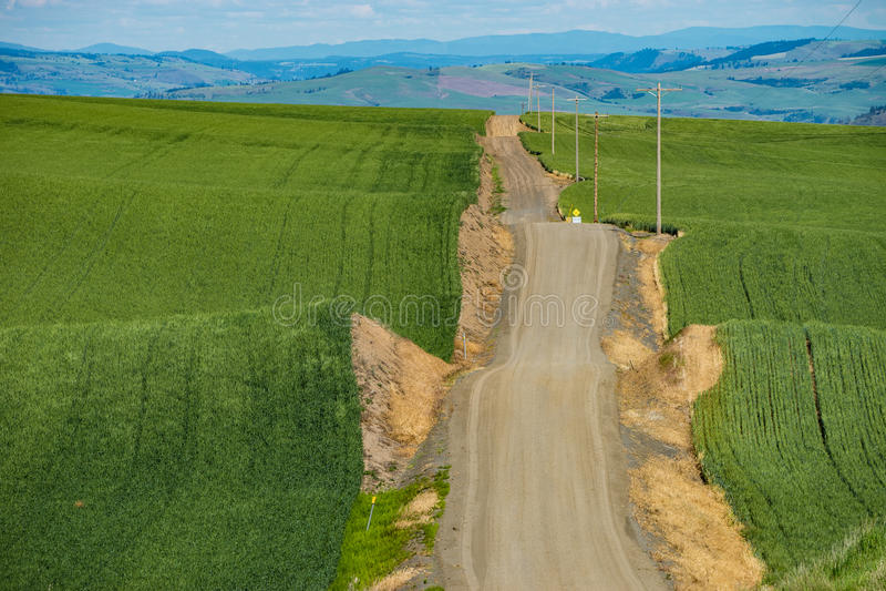 Δρόμος αμμοχάλικου που περνά μέσω των πράσινων τομέων σίτου ανατολικού Washin στοκ φωτογραφίες με δικαίωμα ελεύθερης χρήσης