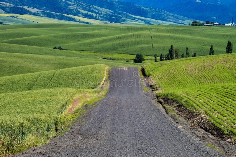Δρόμος αμμοχάλικου που περνά μέσω των πράσινων τομέων σίτου ανατολικού Washin στοκ εικόνες
