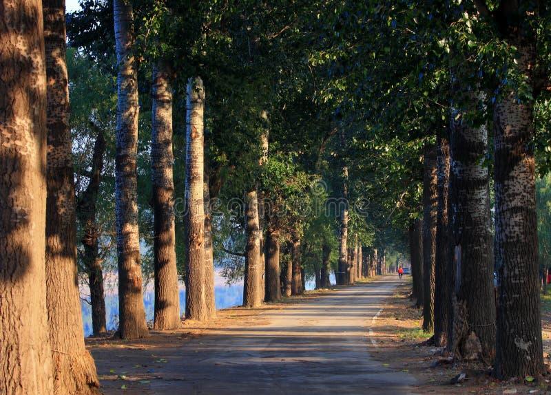 Δρόμος δασικών δέντρων στοκ φωτογραφία με δικαίωμα ελεύθερης χρήσης