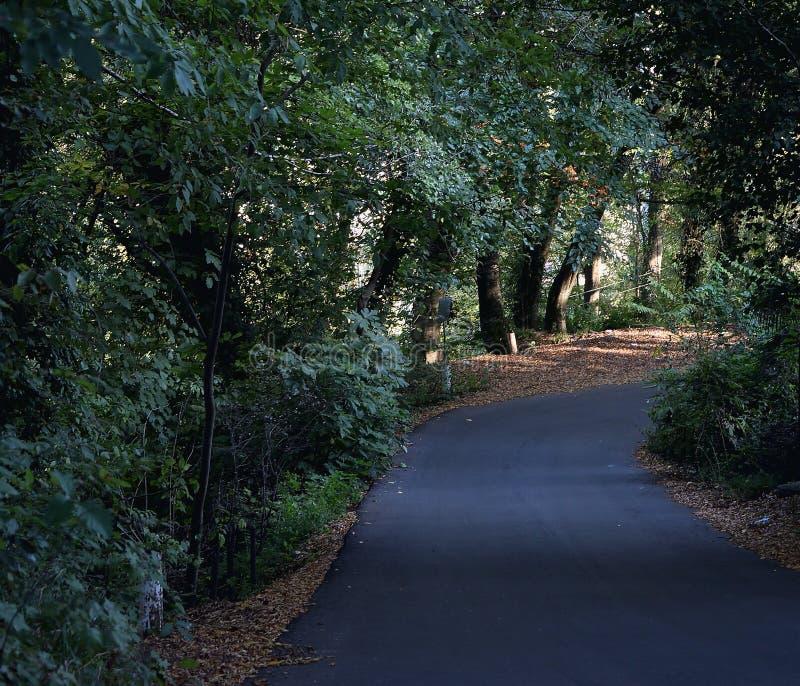 Δρόμος ασφάλτου στο δάσος στοκ εικόνα με δικαίωμα ελεύθερης χρήσης