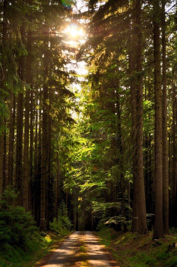 Δρόμος ασφάλτου στο κομψό δάσος δέντρων στη θερινή ημέρα, φως του ήλιου, ήλιος, χαλάρωση ατμόσφαιρας Τοπίο επαρχίας στοκ εικόνες