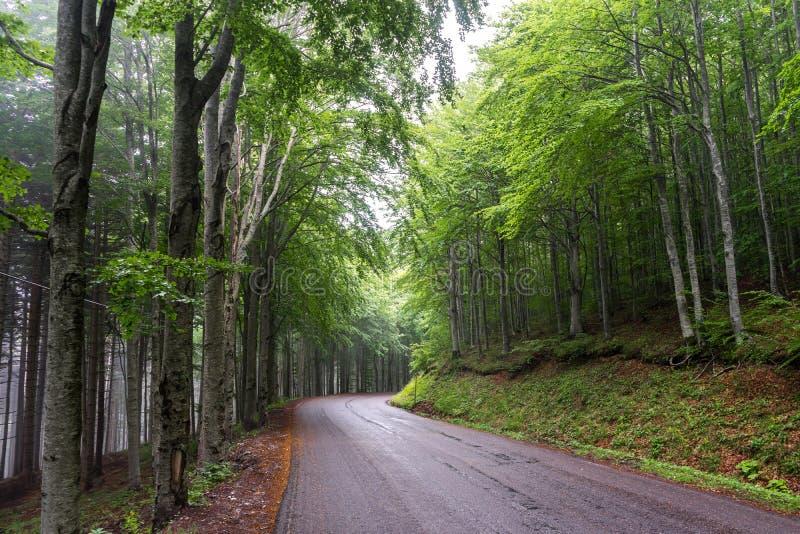 Δρόμος βουνών μέσα σε ένα δάσος 2 στοκ φωτογραφίες