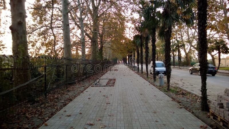 Δρόμος βραδιού φθινοπώρου με το φοίνικα στοκ φωτογραφίες με δικαίωμα ελεύθερης χρήσης