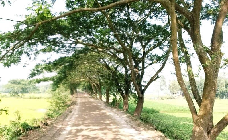 Δρόμος και δέντρα στοκ φωτογραφίες με δικαίωμα ελεύθερης χρήσης