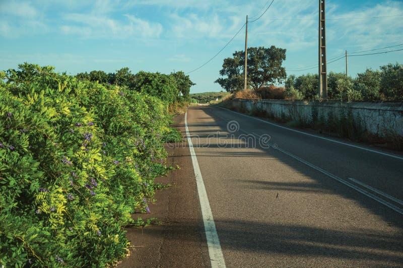Δρόμος και οι ανθισμένοι πολύβλαστοι πράσινοι Μπους στοκ φωτογραφία