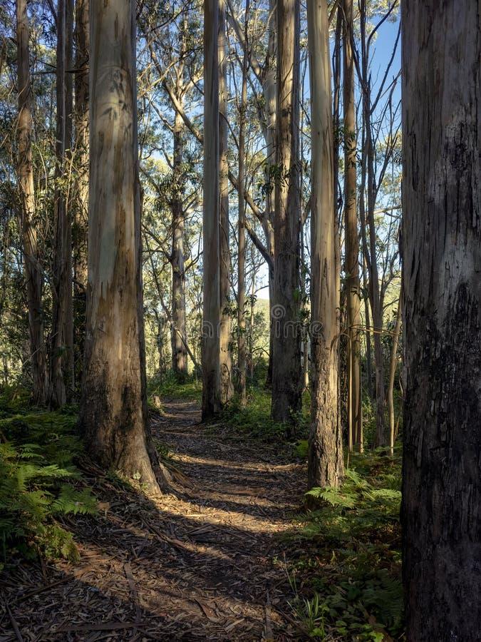 Δρόμος καμπυλών με την ακτινοβολία φωτός του ήλιου μέσω των ξύλων στοκ εικόνες