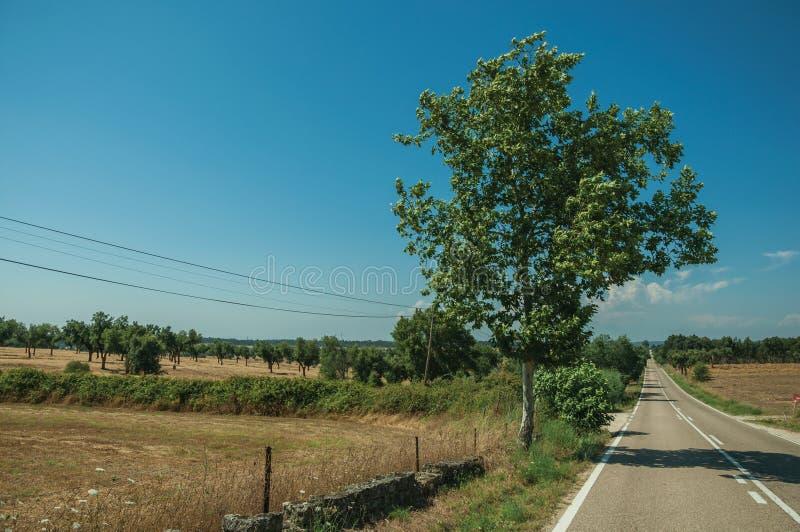 Δρόμος μέσω του αγροτικού τοπίου με τους καλλιεργημένους τομείς και το δέντρο στοκ εικόνα