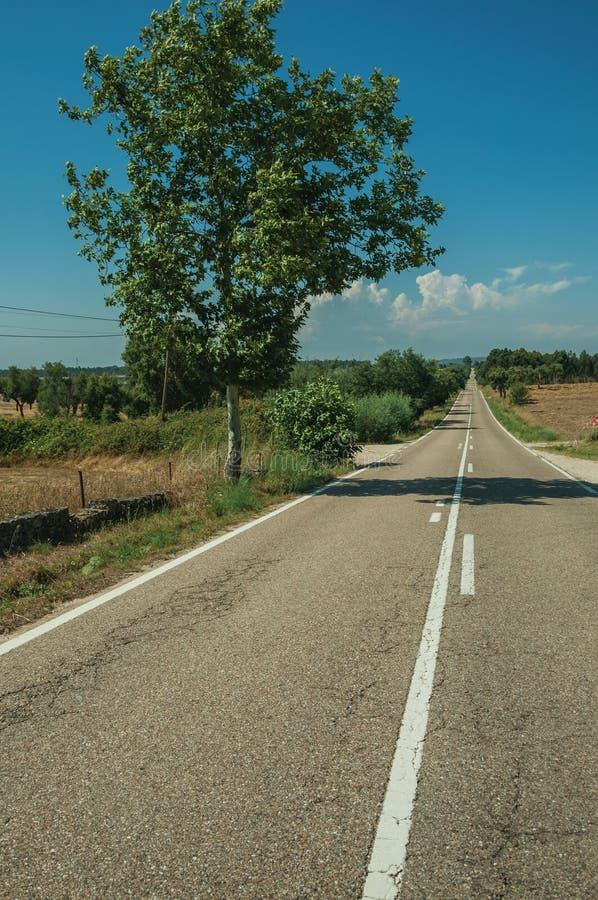 Δρόμος μέσω του αγροτικού τοπίου με τους καλλιεργημένους τομείς και το δέντρο στοκ εικόνες