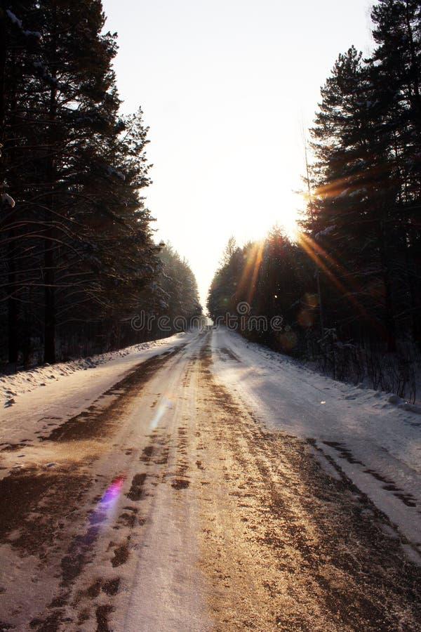 Δρόμος μέσω του δάσους το βράδυ στοκ φωτογραφία με δικαίωμα ελεύθερης χρήσης