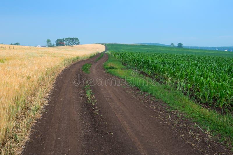 Δρόμος μεταξύ δύο πεδίων στοκ εικόνες