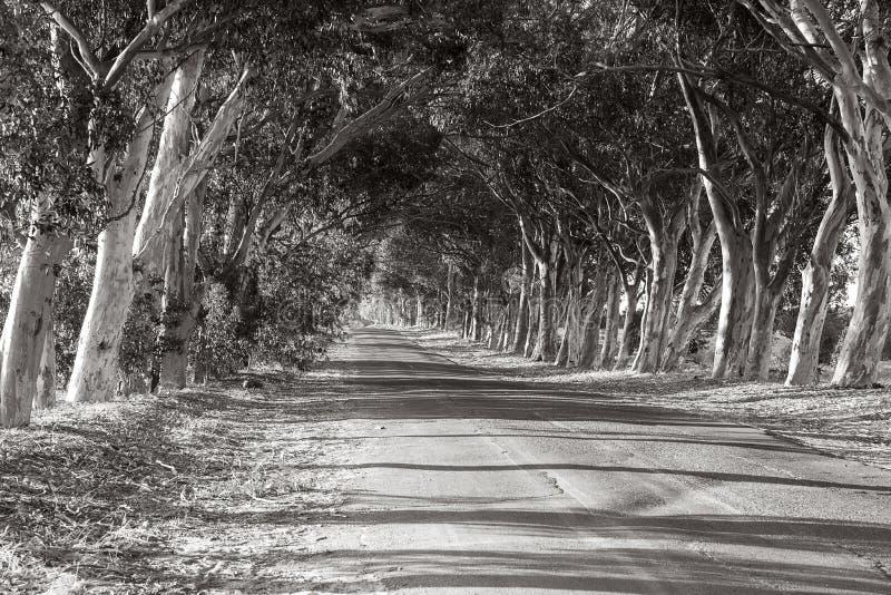 Δρόμος μεταξύ των δέντρων στοκ εικόνες με δικαίωμα ελεύθερης χρήσης