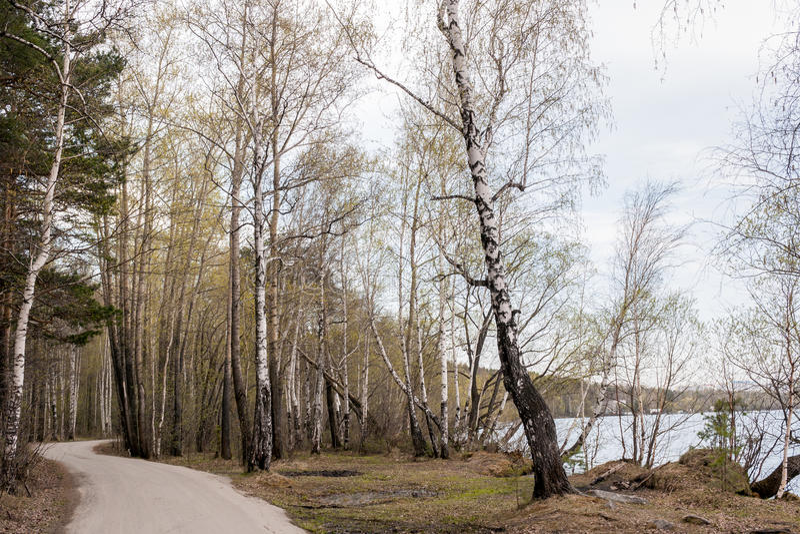 Δρόμος με πολλ'ες στροφές στο δάσος κατά μήκος της λίμνης την πρώιμη άνοιξη στοκ εικόνα