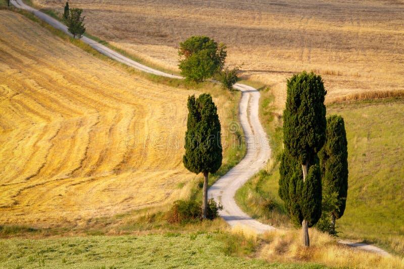 Δρόμος με τα κυπαρίσσια στην Τοσκάνη στοκ φωτογραφία