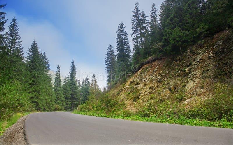 Δρόμος με την ομίχλη στα βουνά, με το πυκνό δάσος πεύκων στις δύσκολες κλίσεις των βουνών Ιδέα για τις υπαίθριες δραστηριότητες,  στοκ φωτογραφία
