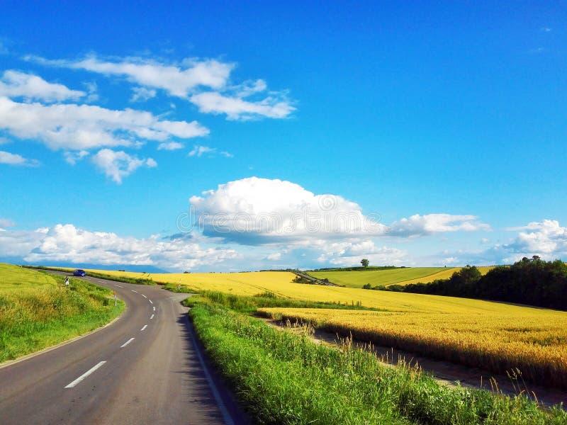 Δρόμος με το λιβάδι στο Hokkaido στοκ εικόνες