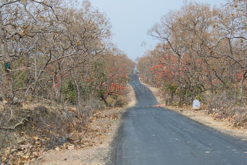 Δρόμος πίσσας στο δάσος στοκ φωτογραφίες με δικαίωμα ελεύθερης χρήσης