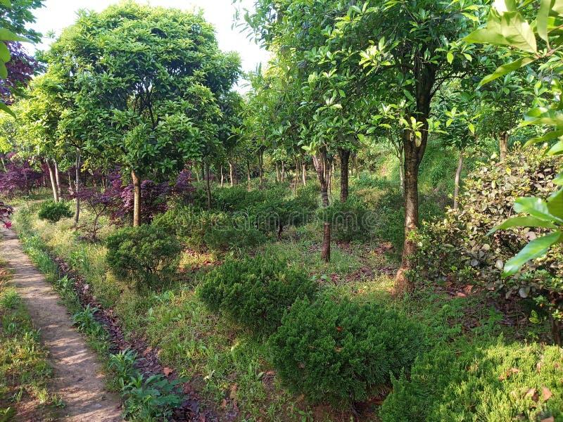 Δρόμος που περιβάλλεται μυστικός από τα δέντρα στοκ φωτογραφίες