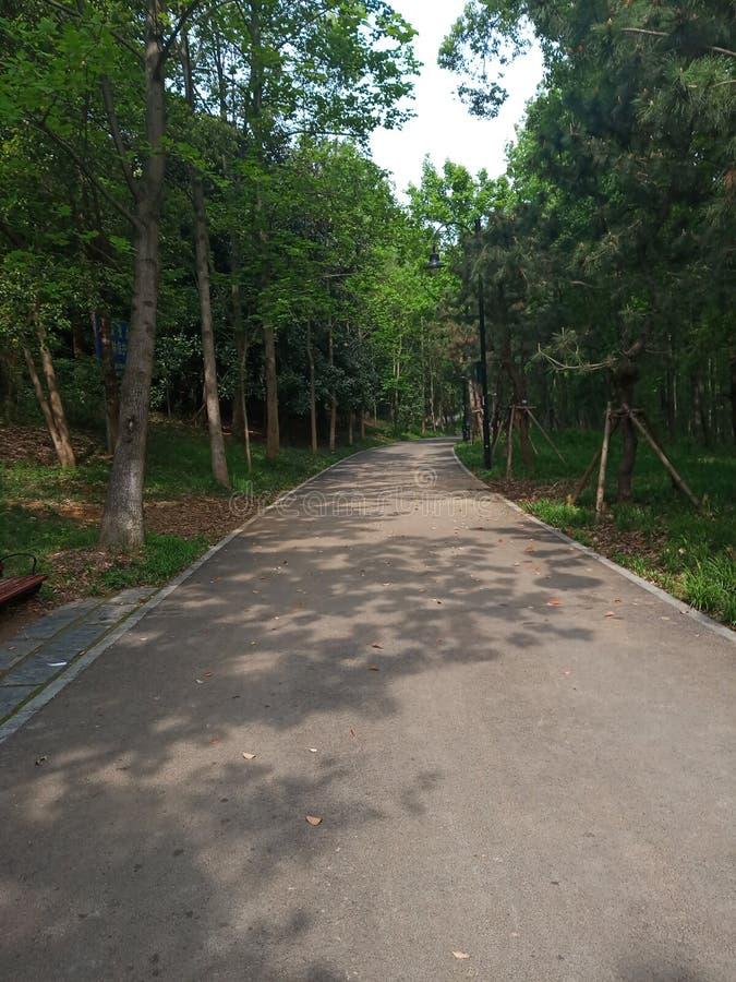 Δρόμος που περιβάλλεται μυστικός από τα δέντρα στοκ εικόνα