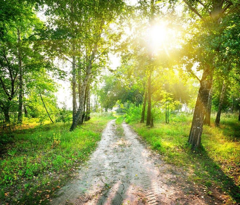 Δρόμος σε ένα δάσος σημύδων στοκ φωτογραφίες