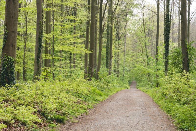 Δρόμος σε ένα πράσινο αποβαλλόμενο δάσος την άνοιξη στοκ φωτογραφία