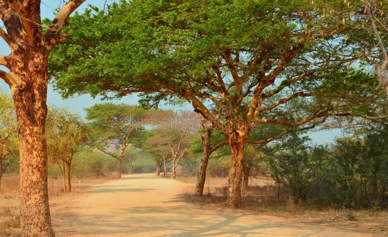 Δρόμος στη Myanmar Birma Bagan στοκ φωτογραφία με δικαίωμα ελεύθερης χρήσης
