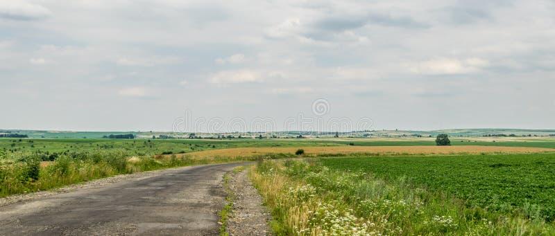 Δρόμος στους γεωργικούς τομείς, πανόραμα στοκ εικόνες