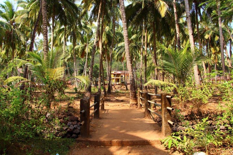 Δρόμος στους τροπικούς κύκλους Ινδία goa στοκ εικόνες