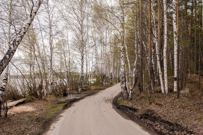 Δρόμος στο δάσος κατά μήκος της λίμνης την πρώιμη άνοιξη στοκ εικόνες με δικαίωμα ελεύθερης χρήσης