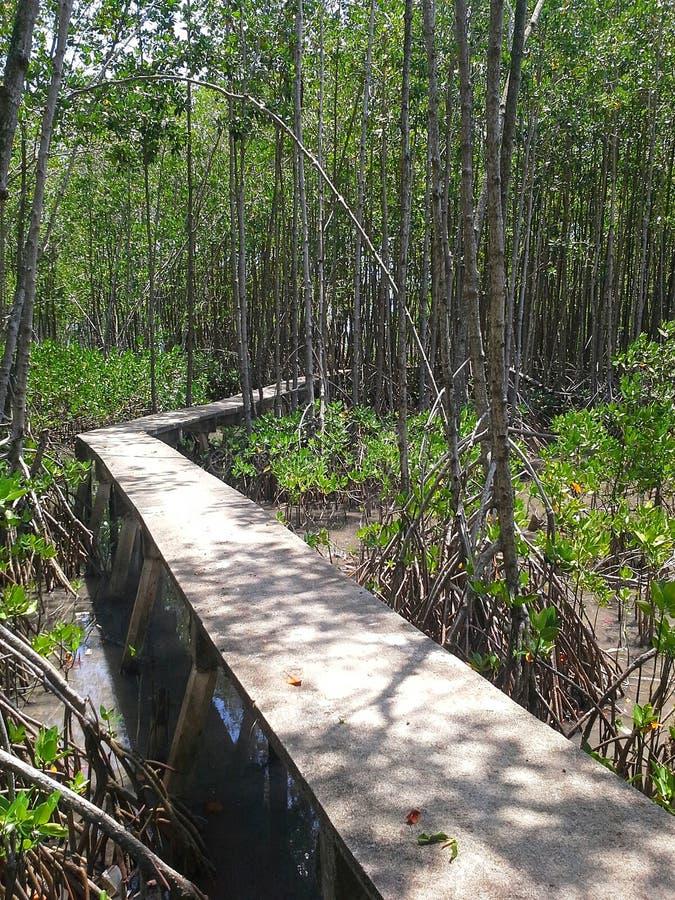 Δρόμος στο δάσος μαγγροβίων, Songkhla, Ταϊλάνδη στοκ εικόνες