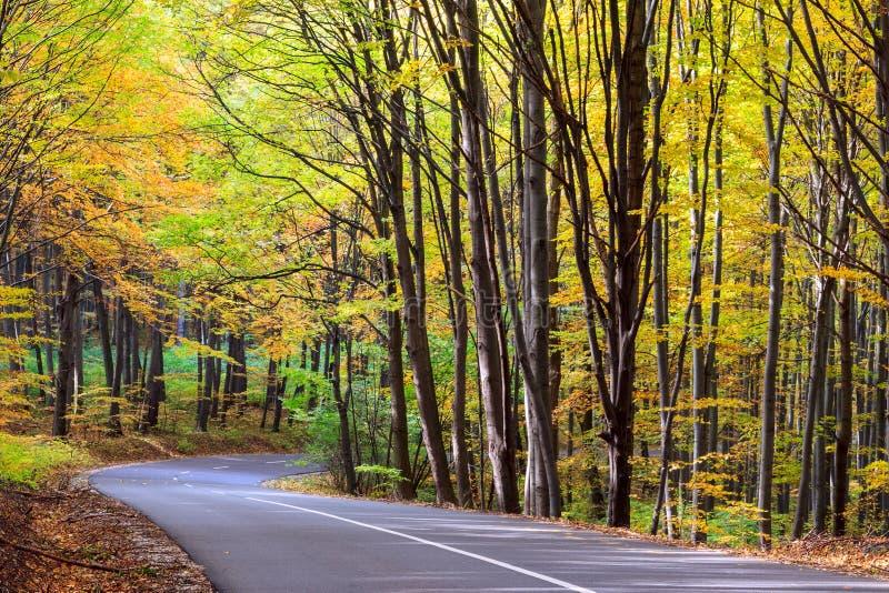 Δρόμος στο δάσος φθινοπώρου στοκ φωτογραφίες με δικαίωμα ελεύθερης χρήσης