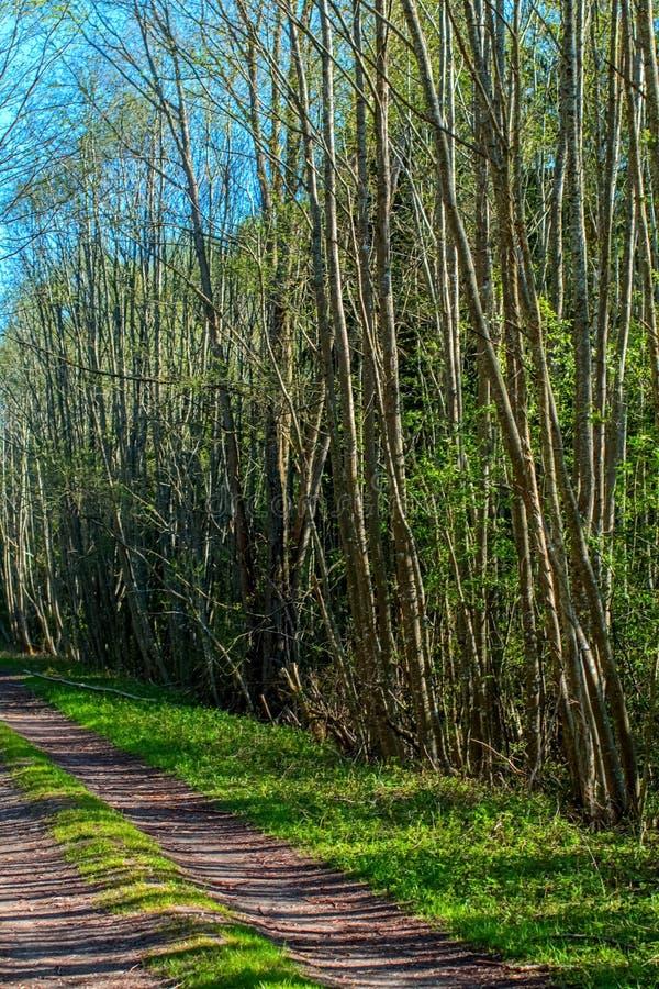 Δρόμος στο δάσος στοκ φωτογραφία