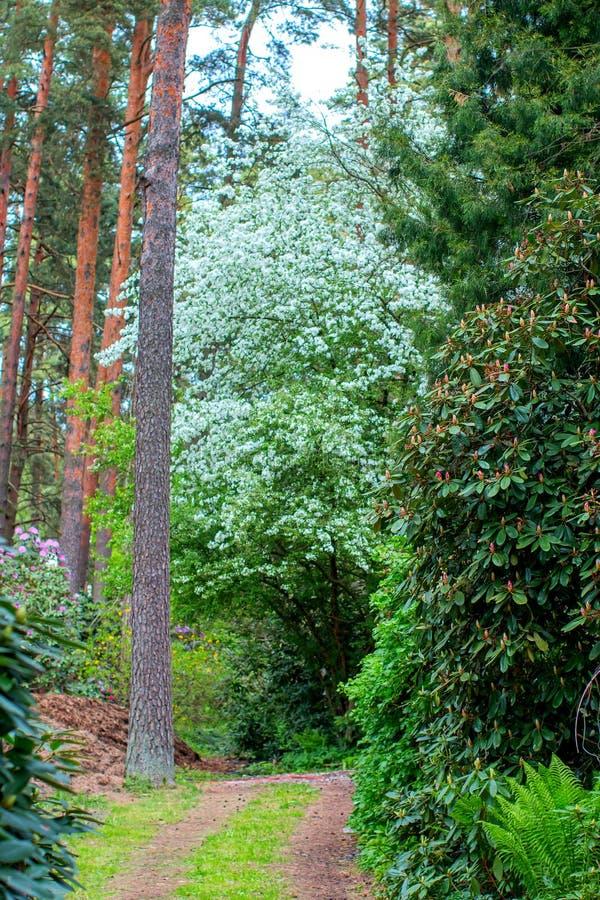 Δρόμος στο δάσος στοκ φωτογραφίες