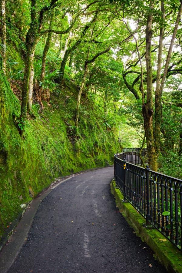 Δρόμος στο δάσος, lugard δρόμος, Χογκ Κογκ στοκ εικόνες
