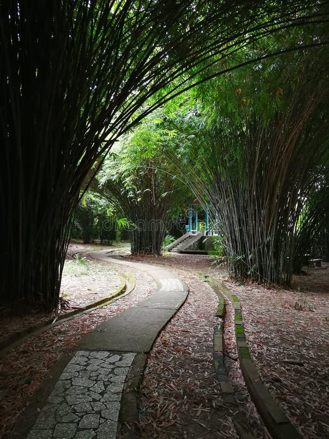 Δρόμος στο δάσος μπαμπού στοκ φωτογραφίες