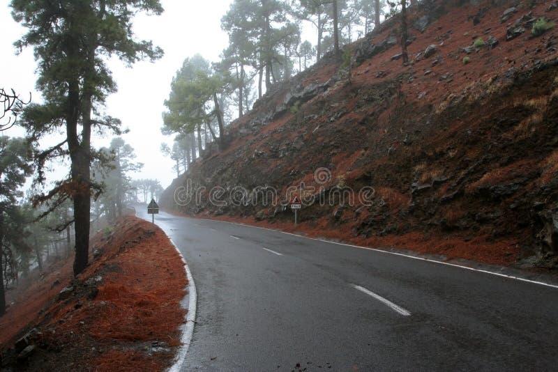 Δρόμος στο δάσος πεύκων στοκ εικόνες με δικαίωμα ελεύθερης χρήσης