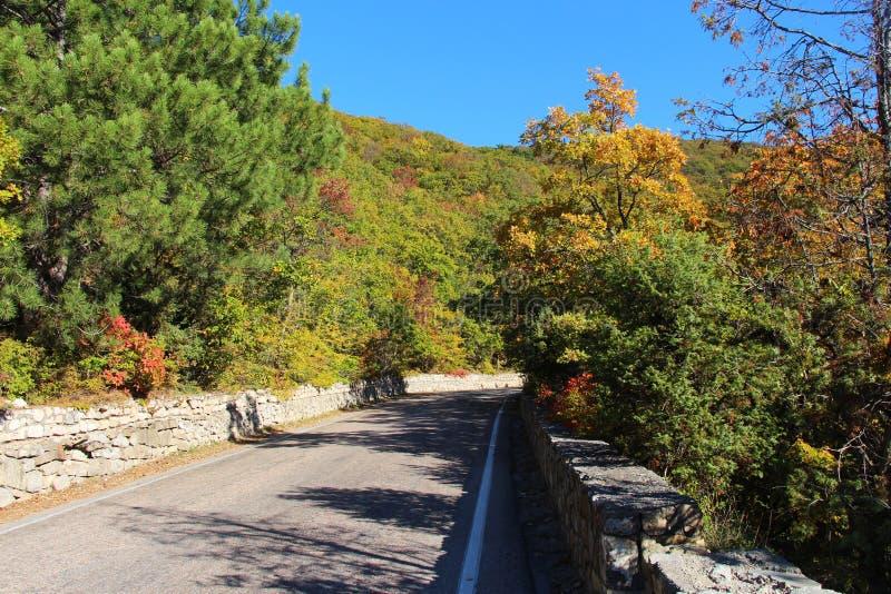 Δρόμος στο δάσος φθινοπώρου στοκ φωτογραφία με δικαίωμα ελεύθερης χρήσης
