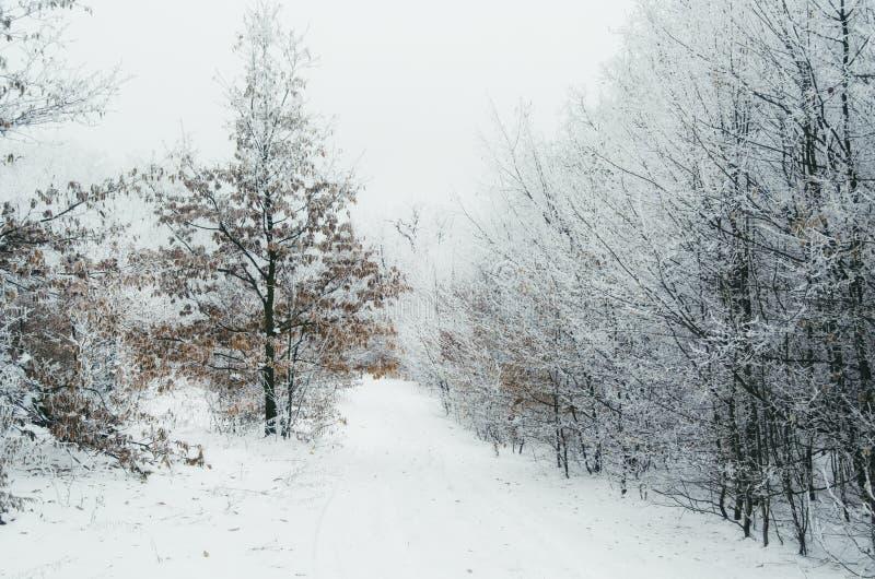 Δρόμος στο χειμερινό δασικό καθάρισμα στοκ φωτογραφίες με δικαίωμα ελεύθερης χρήσης