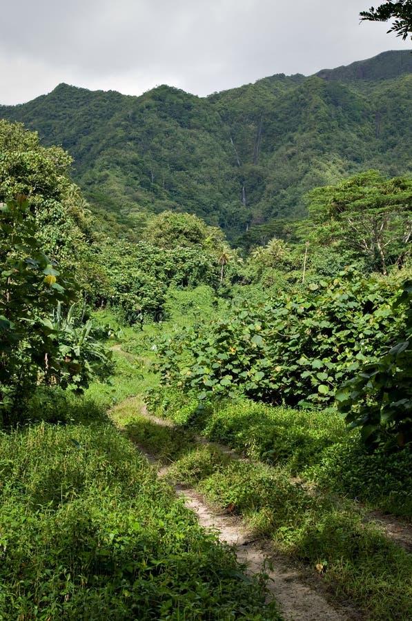δρόμος Ταϊτή raiatea ζουγκλών ρύπ&omic στοκ εικόνες