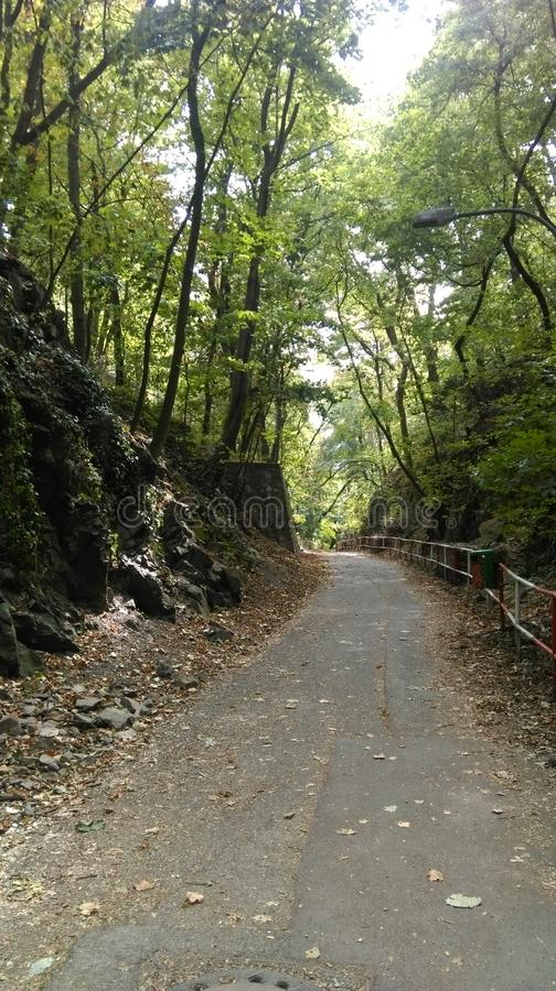 Δρόμος της ζούγκλας στοκ φωτογραφία