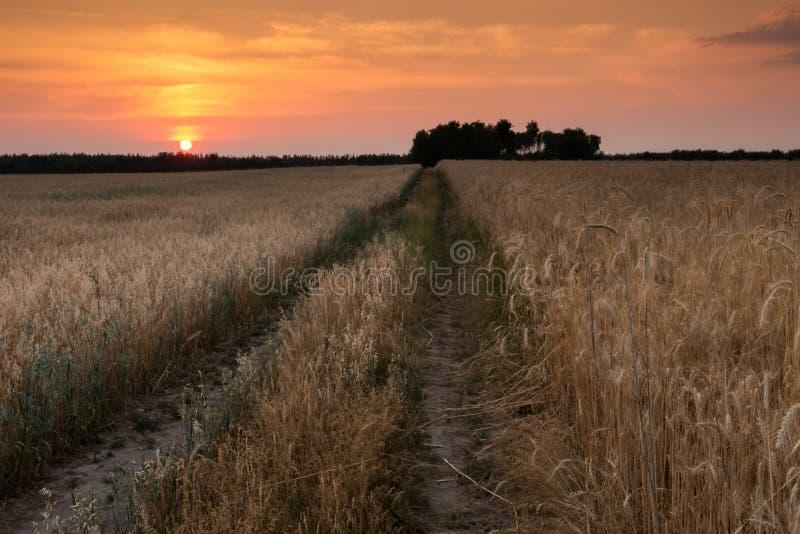 Δρόμος τομέων στο ηλιοβασίλεμα στοκ φωτογραφίες